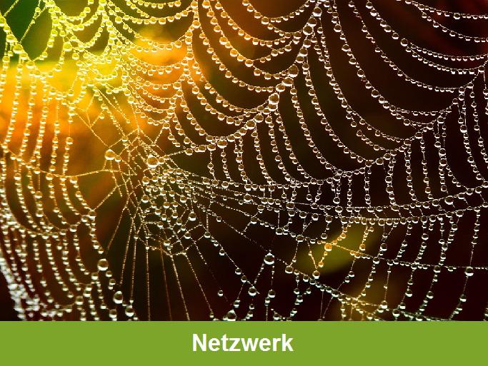 """""""Netzwerk"""": Spinnennetz dessen Tautropfen in das Gelb und Orange von Licht und einem Feldes getaucht sind"""